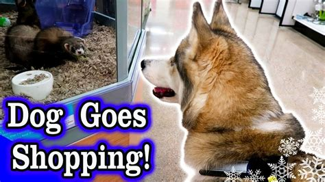 Horacio Goes Shopping Anything Goes by Goes Shopping At Petco Husky Petco Haul