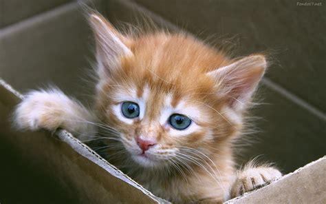 imagenes tiernas de gatos fotos tiernas de gatos ayetfotografia
