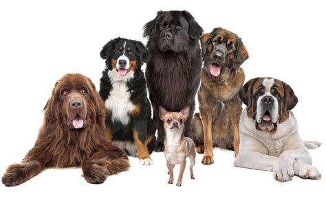 different of dogs different types of dogs puppies quotes