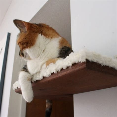 Corner Cat Shelf by Fabric Covered Corner Cat Shelf Catastrophic Creations