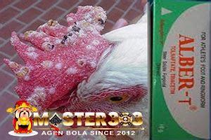 Salep Albert penyakit ayam bangkok yang mematikan cara mengobatinya
