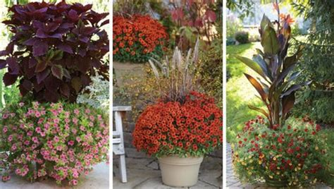 tips to create a focal point in the garden www coolgarden me
