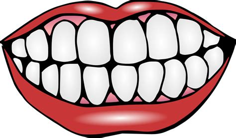 clipart picture tooth clip free clipart panda free clipart images