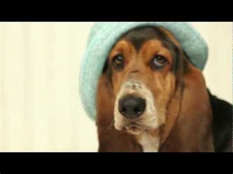 Hushpuppies Ori 55 13 best images about hush puppies timeline on the sixties basset hound puppy and