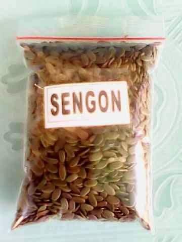 Biji Sengon Solomon F1 borneo trimega perkasa