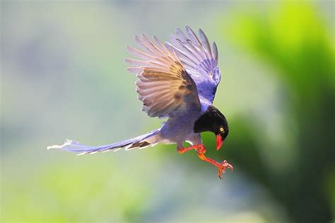 incredible birds and bird photography