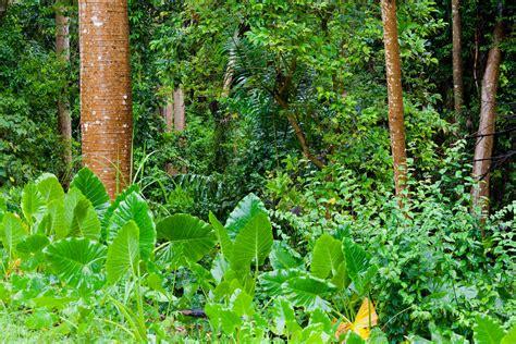la selva tropical jungle free stock photo public domain pictures