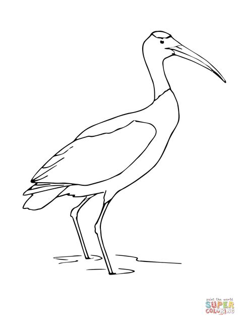 wood stork coloring page free printable coloring pages