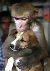 monkey and puppy unlikely animal friendships business insider