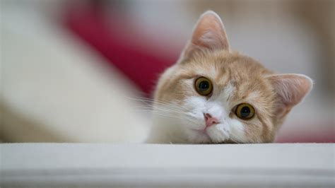 cat wallpapers   awesome full hd