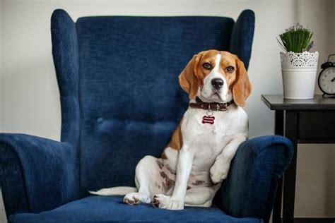 adorable office dogs  kathleen prasad