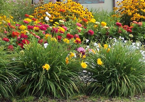 drought tolerant flowering shrubs ashcombe farm and greenhouses taking care of your plants