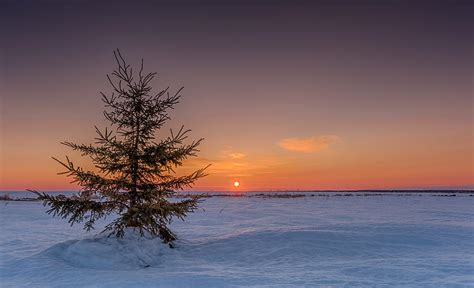 lonely christmas tree photograph by alec hickman