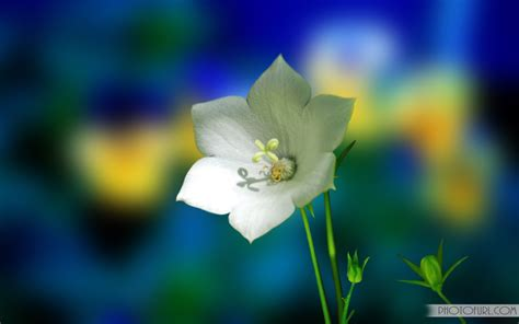 flower wallpaper moving animated flower wallpaper 271670