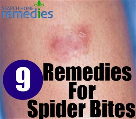 how to treat spider bites brown hairs