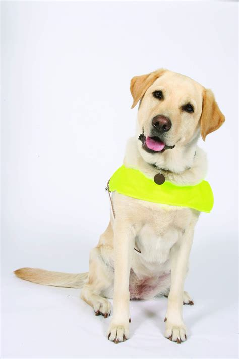 how do guide dogs get trained opinions on guide