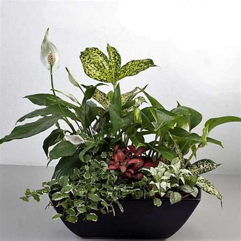 in door plants pot three four plants argements video indoor live plants basket delivery