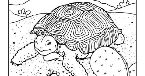 desert turtle coloring page desert tortoise coloring page at gilaben com arizona