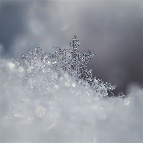 snowflake and snow crystal photographs crystal snowflake photograph by beth riser