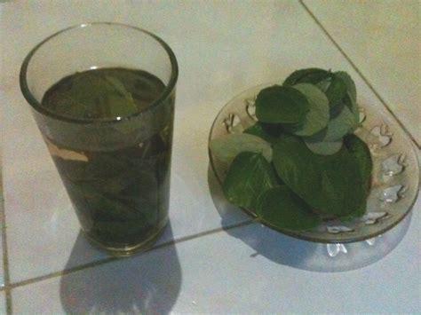 Sabun Terapi Bidara teh daun bidara terapi herbal daun bidara sabun herbal
