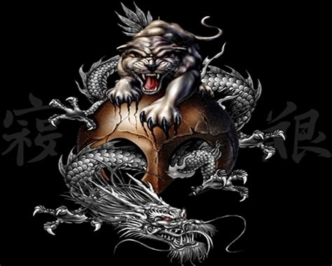 dragon and tiger tattoo and tiger wallpaper wallpapersafari