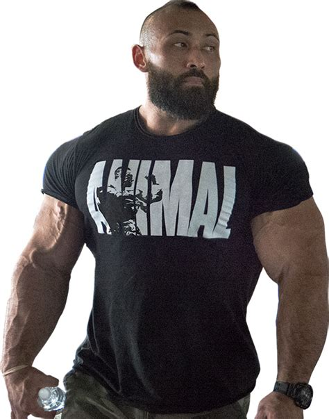 Tshirt Animald animal iconic t shirt by universal nutrition at