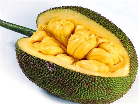jackfruit images important things you need to know about jack fruit tree