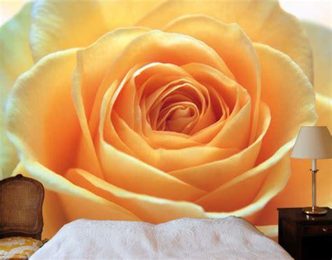 panorama fiori telefono carta da parati the orange 400x280 foto murali poster