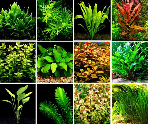 Aquascaping Plants how to create your aquascape aquascaping