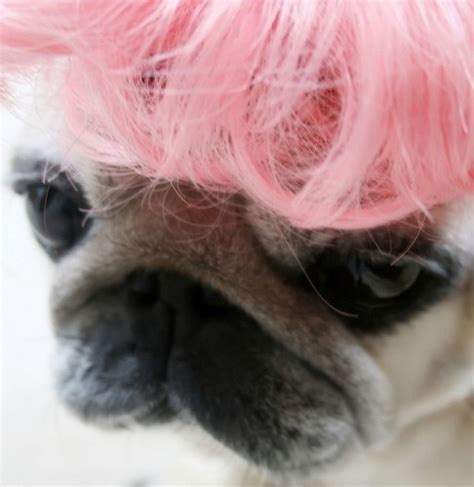 the pink pug pink pug pink haired s