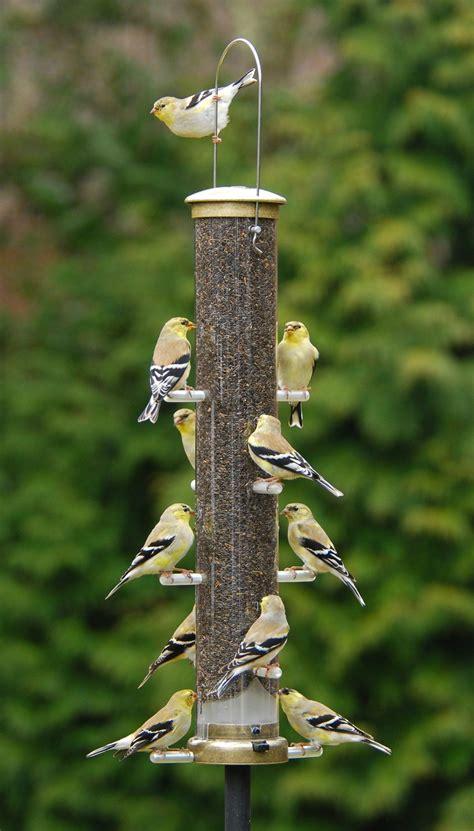 wild bird blog