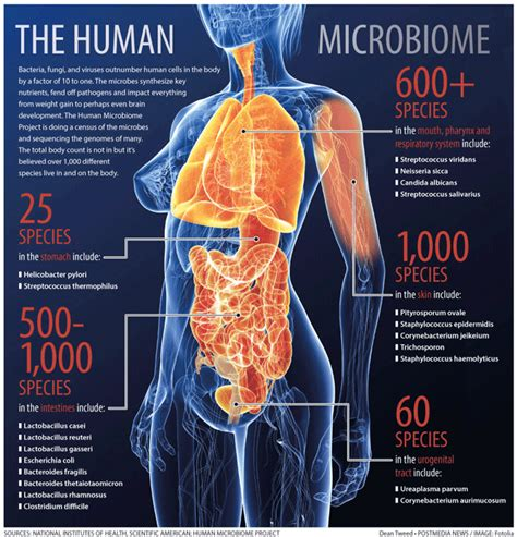 the human in health and illness e book books how the gut microbiome influences the brain and vice