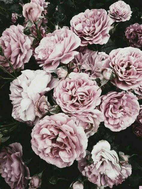 imagenes de flores secas fondo tumblr fondos pinterest computer wallpaper