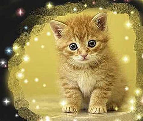 imagenes que se mueven gatos gatitos mimosos para pintar im 225 genes de gatos para