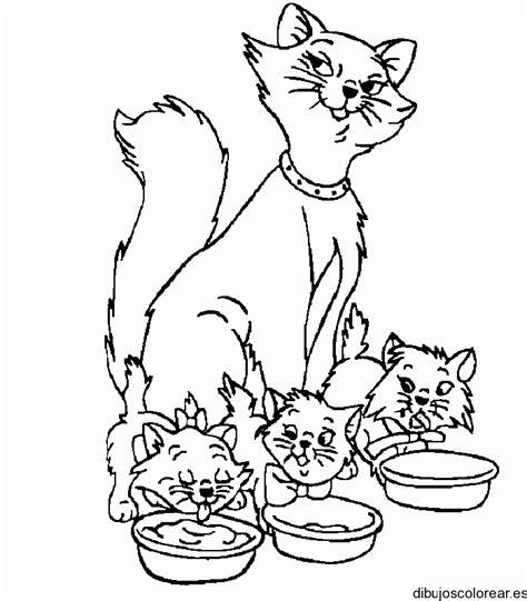 imagenes para colorear gatitos dibujos de gatitos simp 225 ticos para colorear colorear