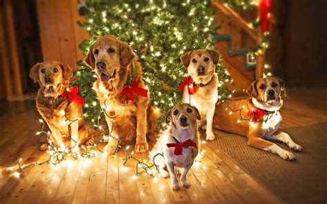 christmas dog wallpaper 183