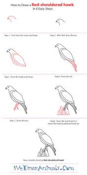 how to draw a hawk how to draw a shouldered hawk