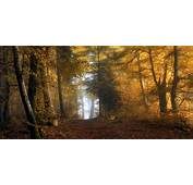 Nature Landscape Sunrise Mist Forest Fall Yellow