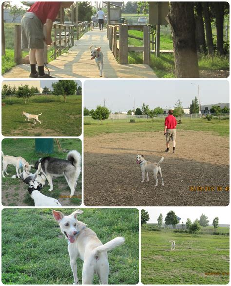 welcome to my foster dog blog caleb at toto park in