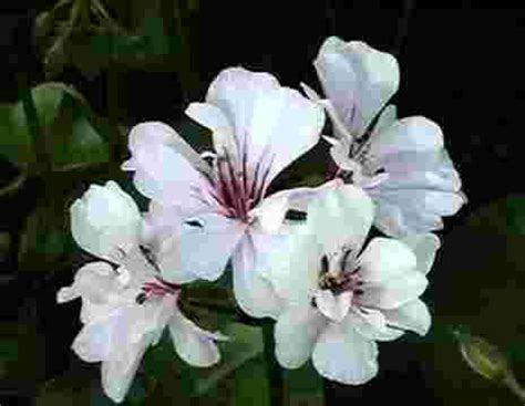 imagine fiori il nostro catalogo di fiori