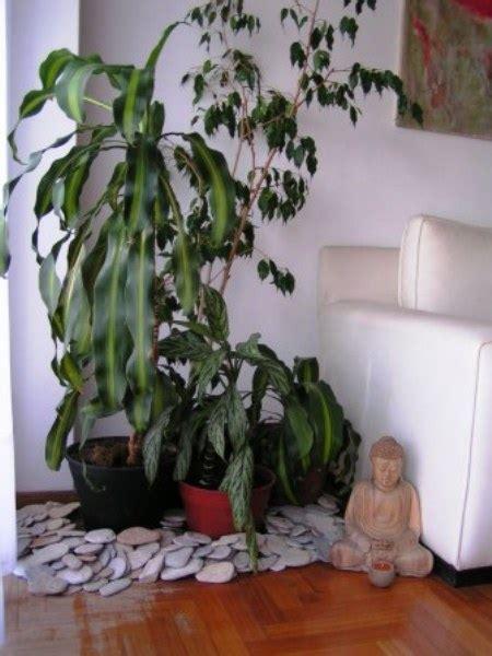 come curare le piante da appartamento come curare le piante da interno