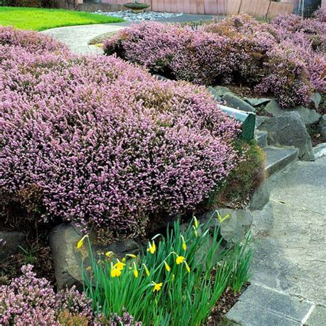 early pink flowering shrubs gardens sun and early on
