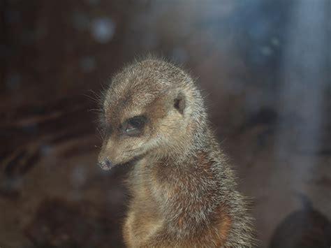 discount vouchers edinburgh zoo jen s place family day out edinburgh zoo
