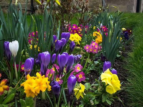 tips    spring flower garden