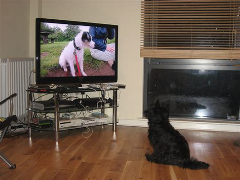 can dogs tv watches on tv
