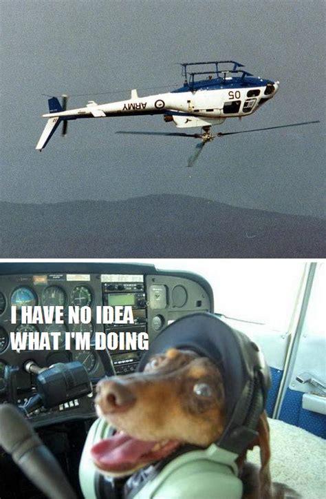 pilot dogs pilot flying