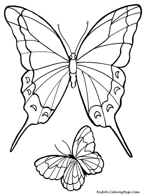 butterflies to color realistic butterfly coloring pages realistic coloring pages