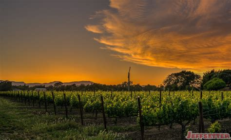 napa valley set of 2 sunset in yountville california napa valley