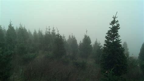 100 acres of douglas white fir scotch pine yelp
