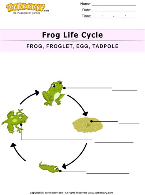 Frog Cycle Worksheet by Label The Pictures Worksheet Turtle Diary